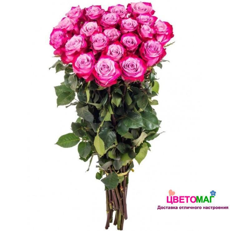 Букет 15 роз  Deep Purple 60 см (Эквадор)