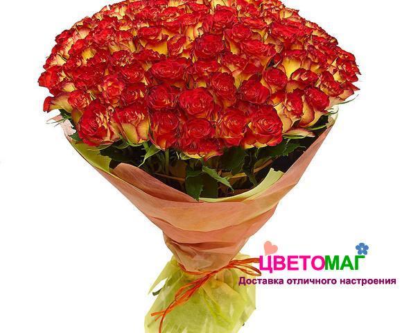 Букет 101 роза  Хай Меджик 50 см (Эквадор)