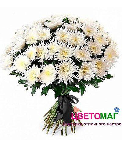 Букет 30 белых хризантем